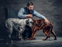 有胡子的男性和两条爱尔兰人的特定装置狗 图库摄影