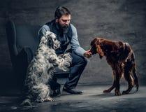 有胡子的男性和两条爱尔兰人的特定装置狗 免版税库存照片