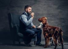 有胡子的男性和两条爱尔兰人的特定装置狗 库存照片