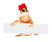有胡子的龙拿着空白的标志的圣诞老人 图库摄影