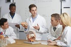 有脑子模型的老师在生物课的 免版税库存照片