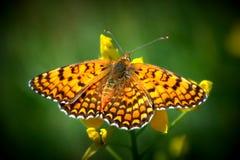 有脚画笔的蝴蝶 免版税库存照片