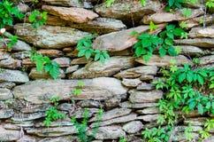 有自然叶子的土气石岩石墙壁 免版税库存照片