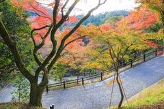 有自然环境的倾斜道路 库存照片