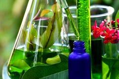 有自然药物研究、有机植物学和科学玻璃器皿的,供选择的绿色草本医学科学家 免版税库存照片