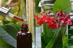有自然药物研究、有机植物学和科学玻璃器皿的,供选择的绿色草本医学,自然护肤科学家 免版税库存照片