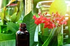 有自然药物研究、自然有机植物学和科学玻璃器皿的,供选择的绿色草本医学科学家 免版税库存照片