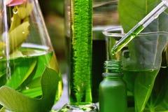 有自然药物研究、自然有机植物学和科学玻璃器皿的,供选择的绿色草本医学科学家 库存图片