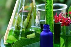 有自然药物研究、自然有机植物学和科学玻璃器皿的,供选择的绿色草本医学科学家 免版税库存图片