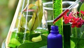 有自然药物研究、自然有机植物学和科学玻璃器皿的,供选择的绿色草本医学科学家 图库摄影