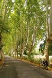 有自行车的,普罗旺斯悬铃树胡同 免版税库存照片