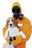 有臭味的狗 免版税库存图片
