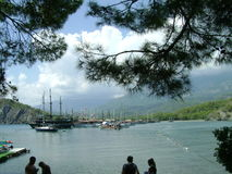 有船的海,从杉木下面的看法分支 免版税库存图片