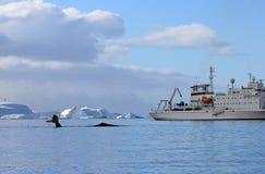 有船的,小船驼背鲸尾巴 库存图片