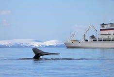 有船的,小船驼背鲸尾巴 免版税库存照片