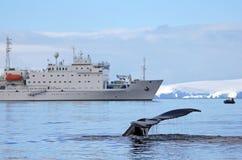 有船的,小船驼背鲸尾巴 免版税库存图片