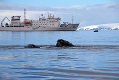有船的,小船驼背鲸头 图库摄影