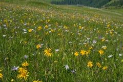 有色的山花的绿色山草甸作为背景或纹理 免版税库存照片