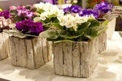 有色的紫罗兰的罐 免版税库存图片