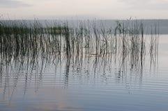 有芦苇反射的湖在黎明 免版税库存图片