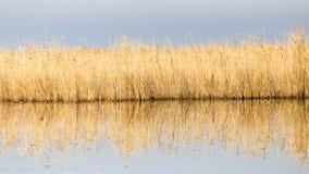 有芦苇的一个湖在黎明在秋天 库存图片