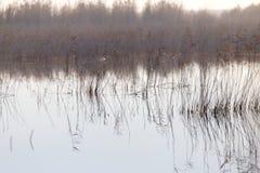 有芦苇的一个湖在黎明在秋天 库存照片