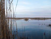 有芦苇的一个湖在黎明在秋天 免版税库存图片