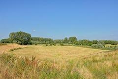 有芦苇的在Kalkense Meersen自然reerve,富兰德,比利时的草甸和树 免版税库存图片