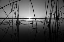 有芦苇的海 免版税库存图片