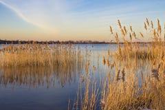 有芦苇的湖在晚上光 库存照片