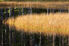 有芦苇的湖在秋天 免版税图库摄影