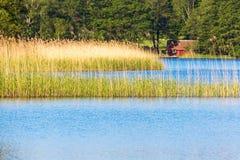 有芦苇的湖 免版税库存照片