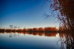 有芦苇的湖 库存照片