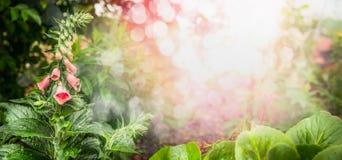 有花、绿色叶子、阳光和bokeh的,横幅美丽的庭院 库存照片