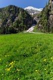 有花和多雪的山的春天绿色草甸在背景,垂直的图象中 奥地利,提洛尔, Zillertal, Stillup 免版税库存照片