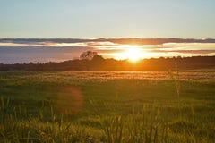 有花和晚上天空的夏天草甸 库存照片