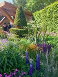 有花和树的一个明亮的庭院 免版税库存照片