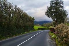 有花和树的乡下路在一有薄雾的天 免版税图库摄影