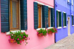 有花和植物的桃红色和蓝色房子 五颜六色的房子在威尼斯,意大利附近的Burano海岛 免版税库存照片
