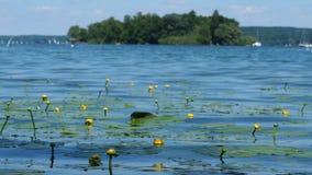 有花和波浪的湖 影视素材