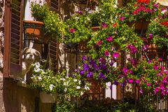 有花和逗人喜爱的狗的浪漫阳台在斯佩洛窗口  图库摄影