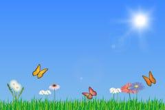 有花和蝴蝶的色情绿色春天草甸 库存图片