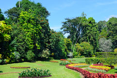 有花床、草坪和树的热带公园 图库摄影