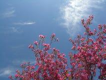 有花瓣惊奇 免版税图库摄影