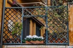 有花的古老阳台在罗马,意大利 库存照片