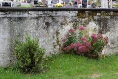 有花的墙壁 库存图片