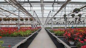 有花的大玻璃温室 增长的花自温室 一间现代花温室的内部 ? 股票录像