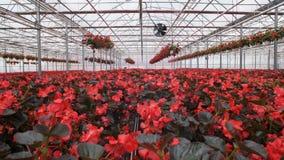 有花的大玻璃温室 增长的花自温室 一间现代花温室的内部 ? 股票视频