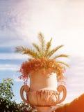 有花的大白色花瓶在与云彩的天空背景在一个晴天 定调子 免版税库存图片