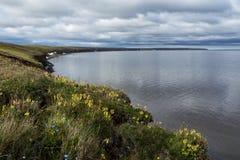 有花的寒带草原在海滩 免版税库存图片